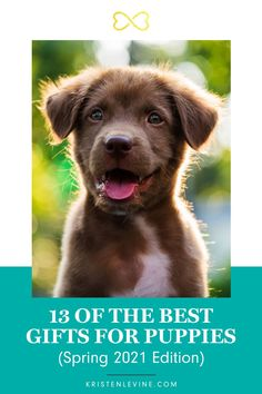 Looking for some unique gifts for your new puppy or the puppy parent in your life? You will love these adorable gifts that will enhance any home. Don't miss this blog post! #puppy #puppies #puppystuff #petlovers #pets #gifts #petsupplies #follow #followeme Fancy Dog Collars, Dog Collars & Leashes, Unique Toys, Unique Gifts, Best Gifts, Gifts For Pet Lovers, Dog Gifts, Love Pet, New Puppy