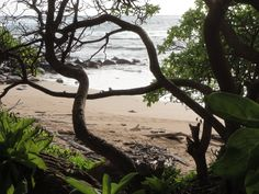 Another shot along the walking path at Lydgate Park on Kauai. Standing in the shade of the trees watching the ocean waves stroll in just a short distance away is just plain relaxing.    Terry Ambrose  Photo Finish - Trouble never looked this good  Watch the trailer at http://terryambrose.com/photo-finish