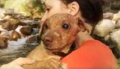 Cão cego mantido preso e isolado do mundo numa despensa é resgatado e ganha vida…