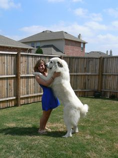 Romeo our Great Pyr!