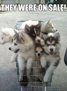 """Cart Full of Pups: Petsecure """"Caption This"""" photo from April 3. Caption by Carolyn."""