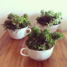LOVE this DIY succulent in tea cups tutorial!