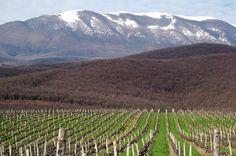 kir yianni vineyards greece