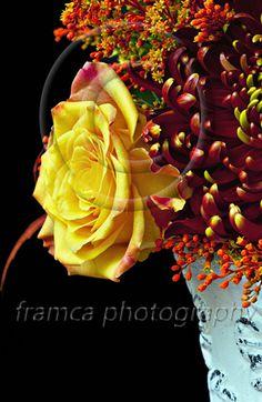 Summer bouquet  framcaphotography.com