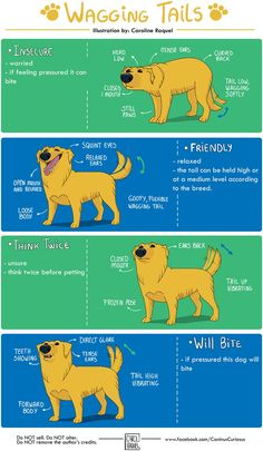 Canine body language - Best Picture For Pet Care Dogs tips . Informations About Canine body l Puppies Tips, Dogs And Puppies, Chihuahua Puppies, Rescue Dogs, Pet Dogs, Doggies, Dog Body Language, Dog Facts, Dog Behavior