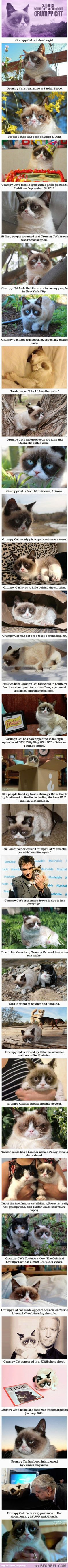 30 Things You Didn't Know About Grumpy Cat…