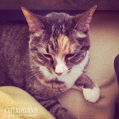 Catladyland: Cats are Funny: Little Meeping-Kitty