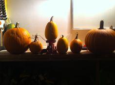 avec ou sans 4 Pumpkin, Vegetables, Food, Buttercup Squash, Meal, Pumpkins, Essen, Vegetable Recipes, Hoods