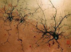 sinapsys