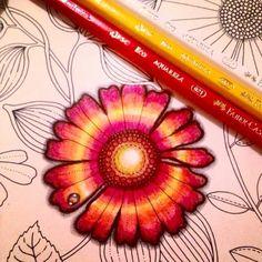 Johanna Basford | Picture by Ellen C. Pereira | Colouring Gallery