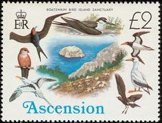 Common Waxbill stamps - mainly images - gallery format