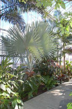 Venues : Roger Williams Park Botanical Gardens RI #VisitRhodeIsland   Rhode  Island Places   Pinterest   Rhode Island And Newport Rhode Island