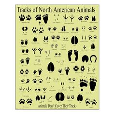 "Amazon.com: CafePress - Small Animal Tracks Poster - 16""x20"" High Quality Poster on Heavy Semi-gloss Paper: Posters & Prints"