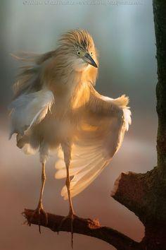 "bellasecretgarden: "" (via Morning stretching by Alberto Ghizzi Panizza | Birds | Pinterest) """