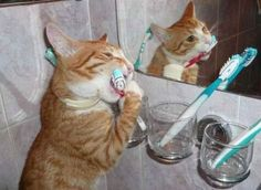 Brushing your Teeth for Heart Health