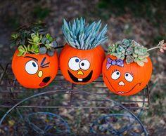 Kürbisse mit Sukkulenten bepflanzen - originelle DIY Idee