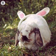 Tofu Tuesday: Bunny Ear Headphones