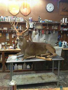Full body deer mount