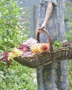 Dreamy morning in the cutting garden ~ take a basket and some shears, and always gather in the cool of the day...
