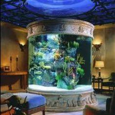 21 Best Aquariums Images On Pinterest Fish Tanks Aquarium Fish