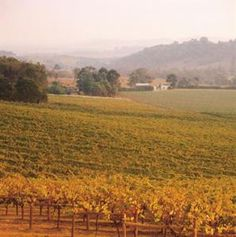 Autumn in Victoria's Yarra Valley, an Australian wine producing area of world renown > http://www.visitvineyards.com/home/wine-food-travel-articles/visit-vineyards-the-best-australian-food-and-wine-travel-guide-march-april-2012#
