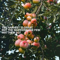 Will you be a part of the great harvest? #Harvest #Abundance #VerseOfTheDay #HelpingYouLiveWell