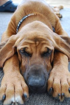 Top 10 Reasons Why Dogs Are Totally Worth It