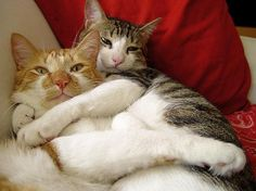 What can be better than a friendly hug? A friendly CAT hug! Here are some of the sweetest pics where our feline friends demostrate how huggable and lovable they are.