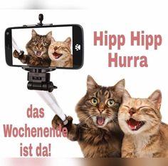【ねこ 貓 CAT】 Funny cats - Self picture. Selfie stick in his hand. Couple of cat taking a selfie together with smartphone camera - stock photo Selfie Gato, Funny Selfie, Self Pictures, Funny Cat Pictures, Pictures Images, Self Foto, I Love Cats, Cute Cats, Funny Dogs