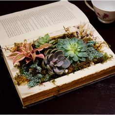 $23 terrarium old book concept for succulents