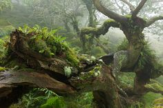 Mirkwood? Dartmoor National Park, England photographed by Duncan George