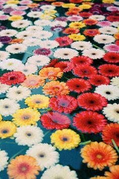 flower soak.                                                                                                                                                     More