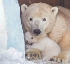 Adorable mom & cub!