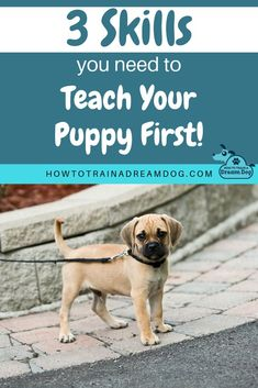 New Puppy? These are the 3 most important skills to teach your puppy first! Set your puppy up for success and help your puppy transition smoothly into life with your family.