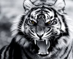 Animals Discover Roar of the Tiger wallpaper by Xavier_TripleX - 07 - Free on ZEDGE Tiger Tattoo Sleeve Tiger Head Tattoo Chest Tattoo Animal Animal Tattoos Lion Chest Tattoo Photo Tigre Angry Tiger Tiger Roaring Predator Art Tiger Tattoo Images, Tiger Tattoo Design, Tiger Wallpaper, Animal Wallpaper, Tiger Tattoo Sleeve, Tiger Art, Tiger Head, Tiger Tiger, Angry Tiger
