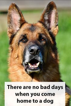 dog stuff,dog ideas,dog care,dog tips,dog grooming Fear Of Dogs, Puppy Quotes, Baby Quotes, Basic Dog Training, No Bad Days, Hacks, Beautiful Dogs, Dog Grooming, Dog Owners