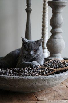 rustic - grey - cat - candleholders - pottery - aardewerk - kat