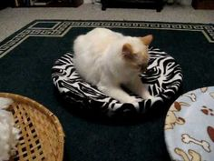 Diy cat bed! About 2 yards (microfiber) fabric, shallow round basket, elastic band for the fabric to allow washing, batting for soft, squishy filling!