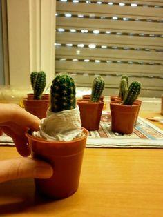 Pie de injerto preparado para el corte Cactus Terrarium, Cactus Planta, Cactus Y Suculentas, Cacti And Succulents, Potted Plants, Flower Band, Cactus Flower, Flora, Planter Pots