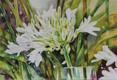 Agapanthus Kirstenbosch. White Agapanthus, Watercolor, History, South Africa, Pictures, Painting, Art, Pen And Wash, Photos