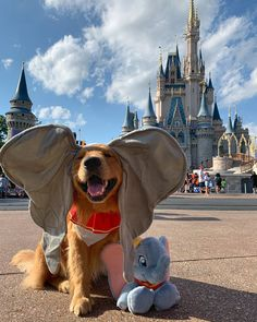 Things that make you go AWW! Like puppies, bunnies, babies, and so on. A place for really cute pictures and videos! Super Cute Puppies, Cute Baby Dogs, Cute Dogs And Puppies, Doggies, Babies With Dogs, Cute Pets, Love Dogs, Baby Puppies, Baby Animals Pictures