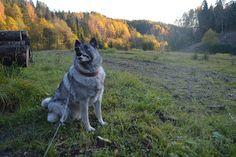 Gårdstunet Hundepensjonat: Deilig mandag med hyggelig besøk av 2- og 4-bente!...