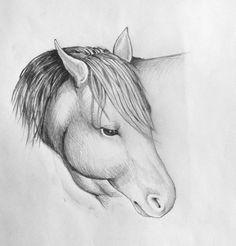 study to horse head 1