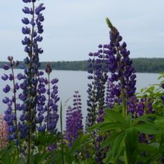 Abby Lane Cottage- Surry Maine Vacation Cottages 207-374-3500