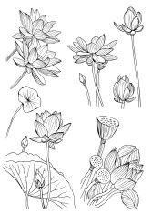 Ensemble de fleurs exotiques. Illustration de vecteur Doodle Stock Vecteur…