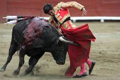 peru_bullfighting_photos-1.jpg (650×433)