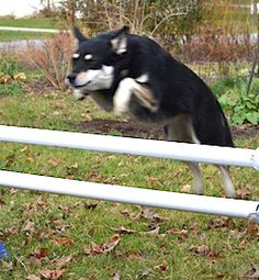 DIY dog hurdles A basic canine agility course consists of: Jumps (standard pole and tire) Tunnels Teeter Weave poles Pause table