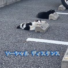 Funny Cats, Funny Animals, Cute Animals, Japanese Aesthetic, Cute Icons, Photo Dump, Cool Cats, Aesthetic Pictures, Cool Pictures