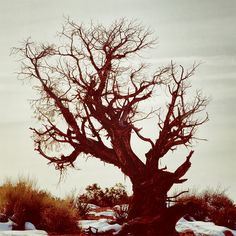 This specific tree sits to the west of North Window in Arches National Park