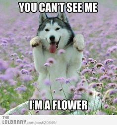 Moon moon is a flower :)